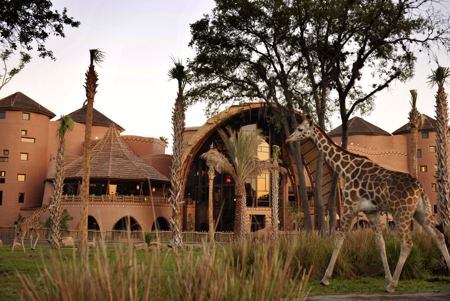 The Ultimate Review of Kidani Village at Walt Disney World featured by top US Disney blogger, Marcie and the Mouse: Kidani Village at Animal Kingdom Lodge at Walt Disney World is one of the coolest hotels at Disney World