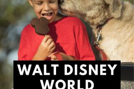 How to Bring a Pet at Walt Disney World, tips and tricks featured by top US Disney blogger, Marcie and the Mouse: Heading to Walt Disney World with pets? Find out all the pet-friendly Walt Disney World Resorts and what to do with your pet at Walt Disney World.